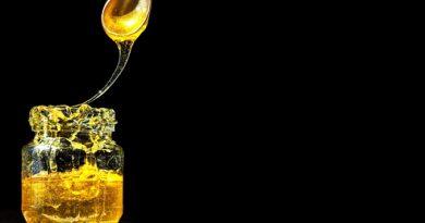 Le miel des ruches de Julien